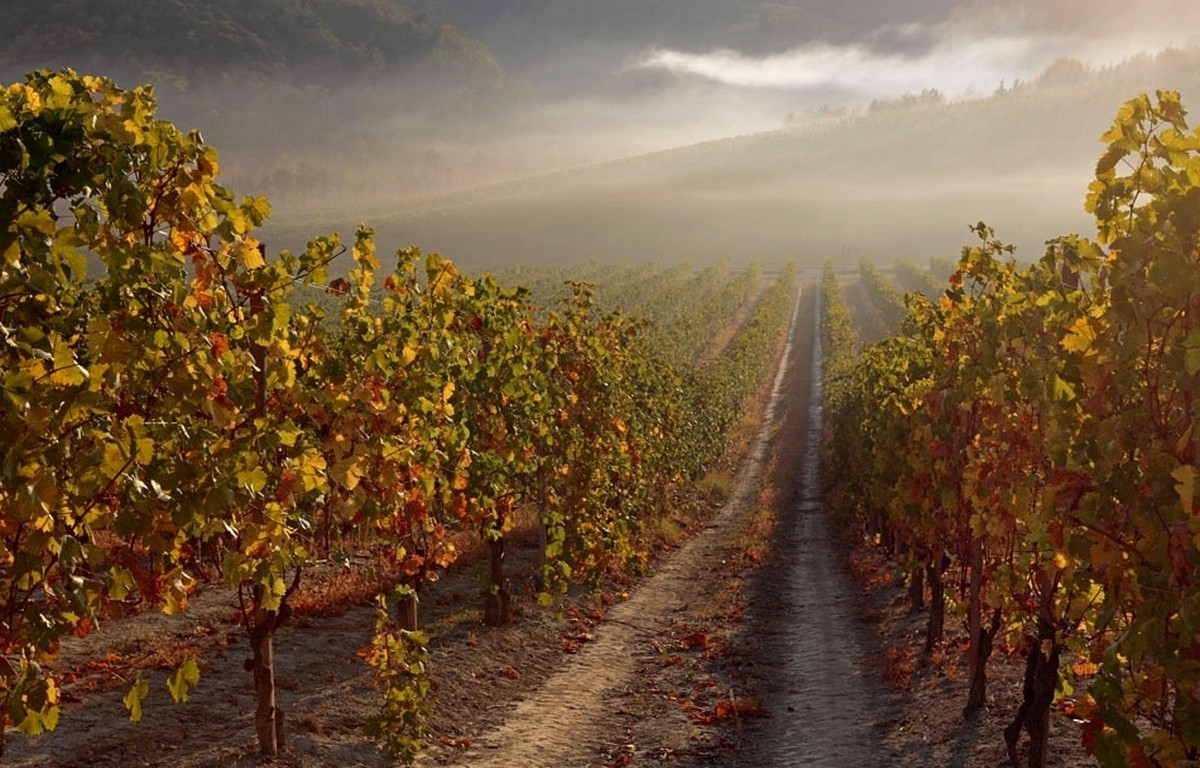 Full Hd 3d Wallpapers 1920x1080 Free Download For Mobile Nature Landscape Vineyard Mist Sunrise Path Hill