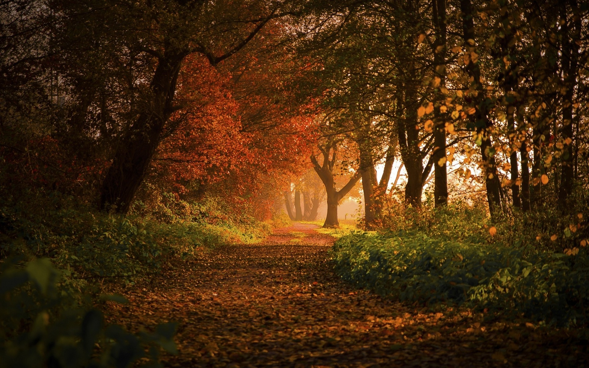 Fall Leaves Hd Mobile Wallpaper Nature Landscape Forest Fall Path Leaves Trees