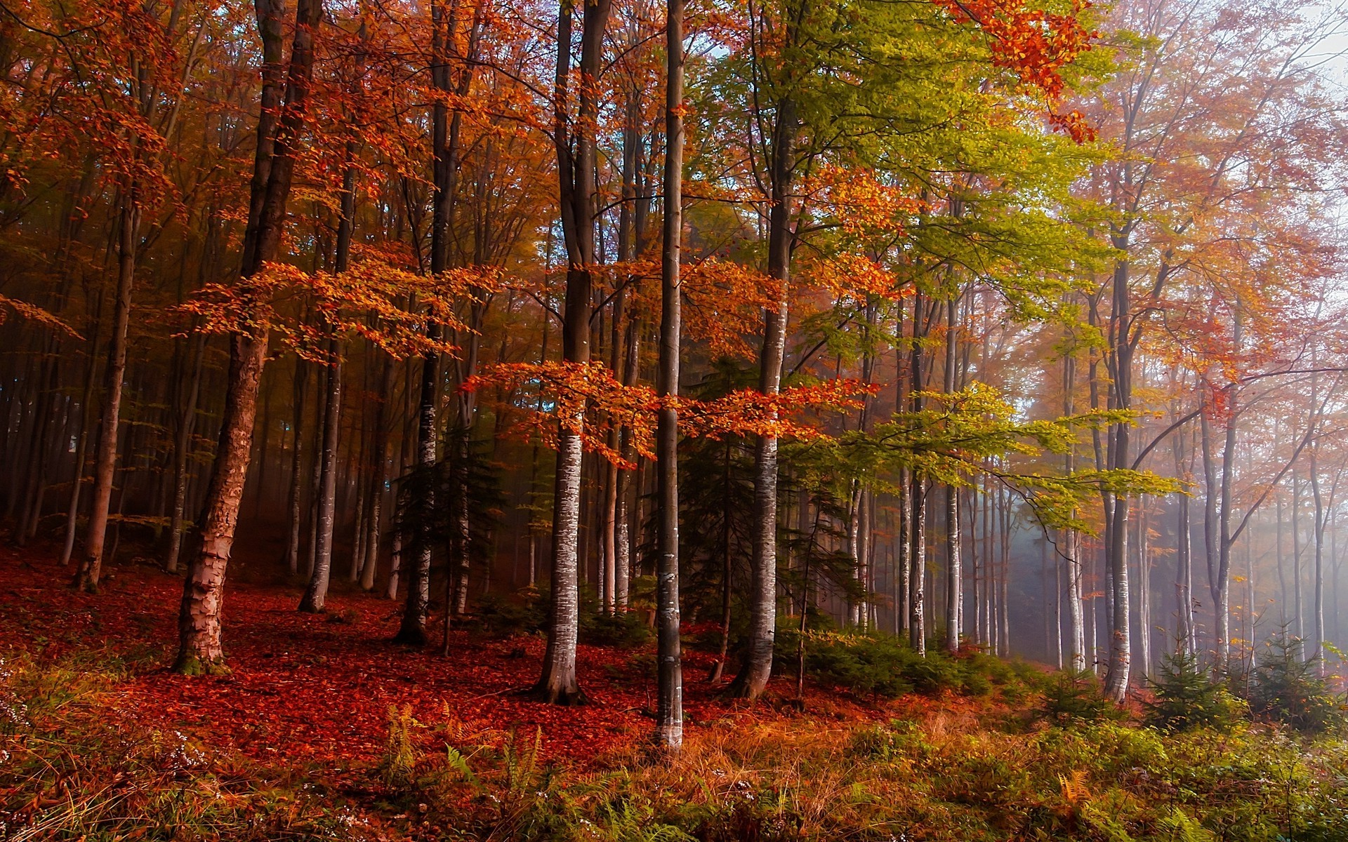 Fall Wallpaper 1600x900 Nature Landscape Fall Mist Forest Colorful Ferns