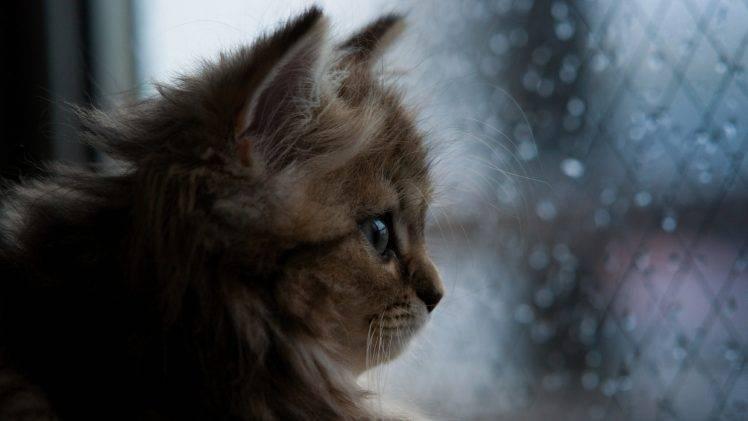 Fall Owl Wallpaper Cat Kittens Animals Nature Profile Face Closeup