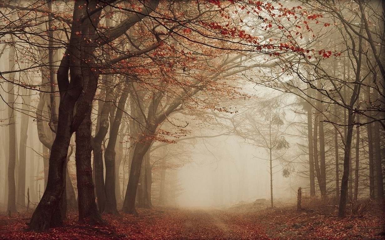 Fall Leaves Desktop Wallpaper Backgrounds Nature Landscape Road Leaves Mist Fall Trees Path