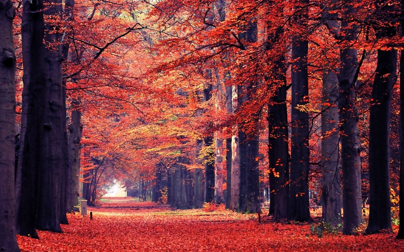 Full Screen Desktop Fall Leaves Wallpaper Nature Landscape Fall Leaves Path Trees Park Tunnel