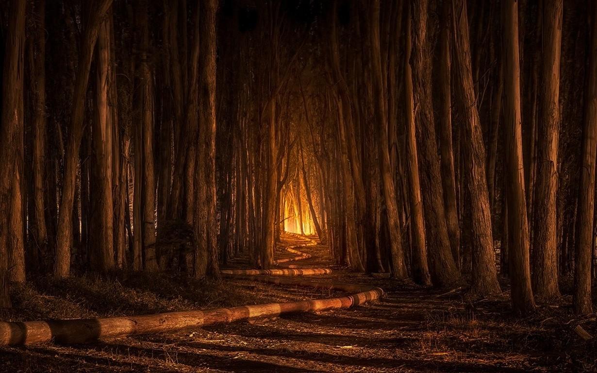 4k Anime Monster Girls Wallpaper Nature Landscape California Forest Path Shadow