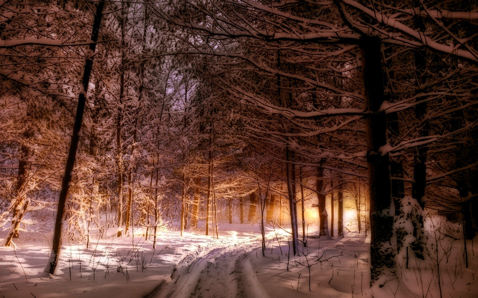 Snow Anime Wallpaper Nature Landscape Maine Forest Winter Path Snow