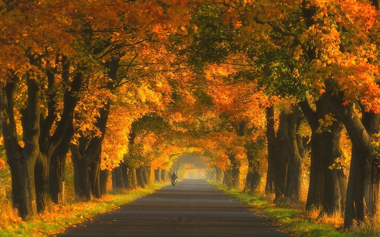 Fall In Love Leaf Wallpaper Nature Landscape Road Trees Tunnel Fall Grass