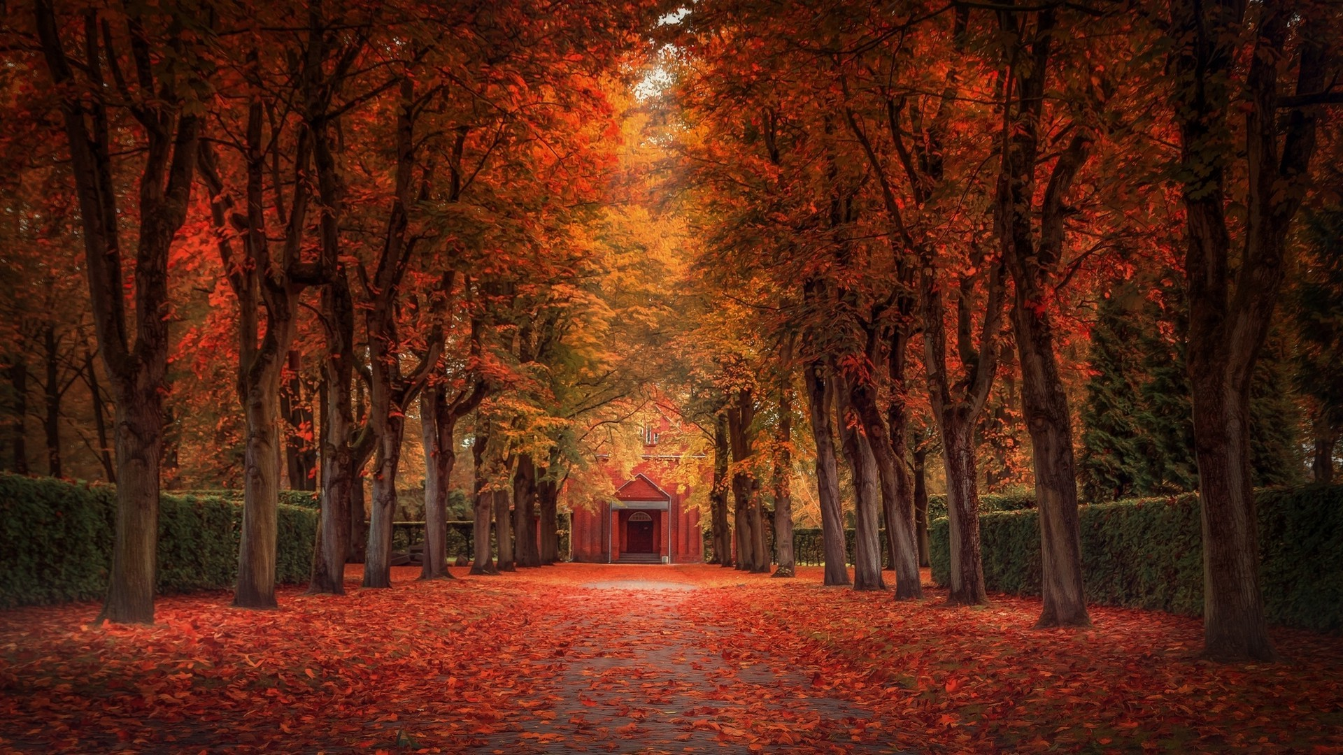 Fall Colors Desktop Wallpaper Nature Landscape Fall Leaves Trees Street Park