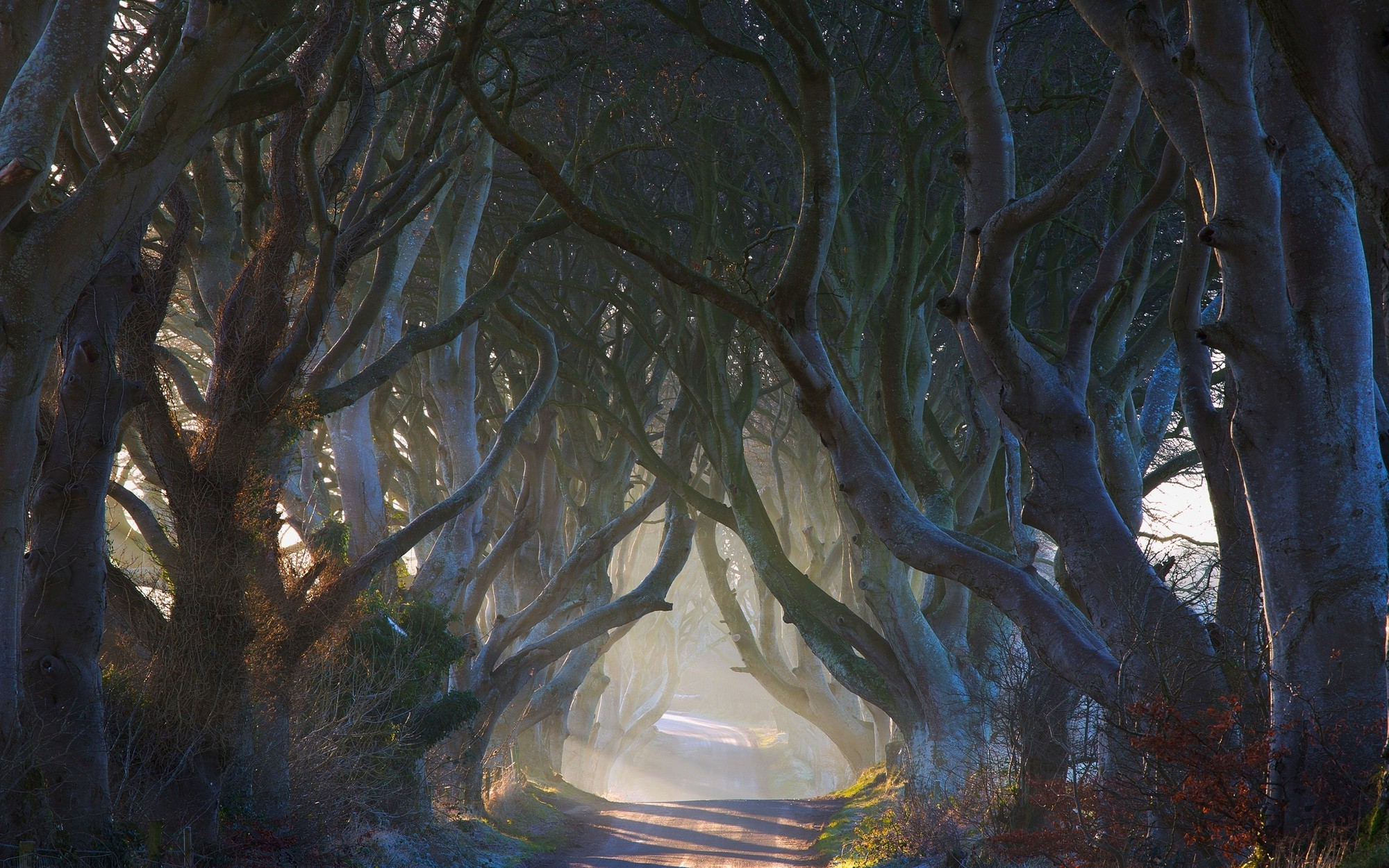 New 3d Wallpapers Free Download For Mobile Nature Landscape Fairy Tale Road Trees Ireland Mist