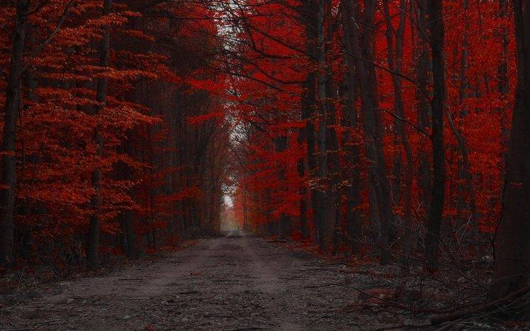 Late Fall Wallpaper Nature Red Forest Nature Path Trees Landscape Fall Dirt