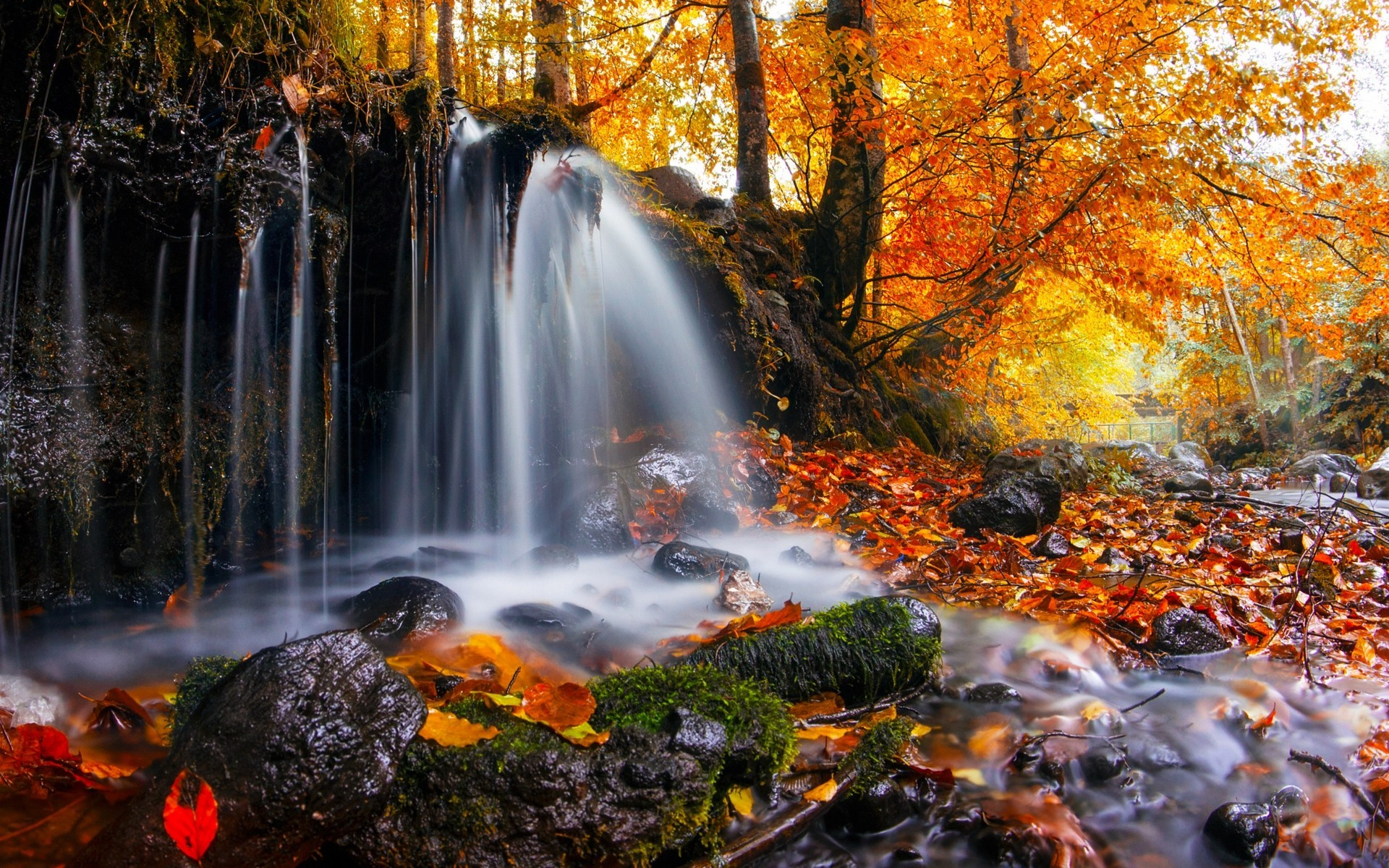 Fall Leaf Wallpaper For Mobile Nature Landscape Waterfall Trees Leaves Fall Moss