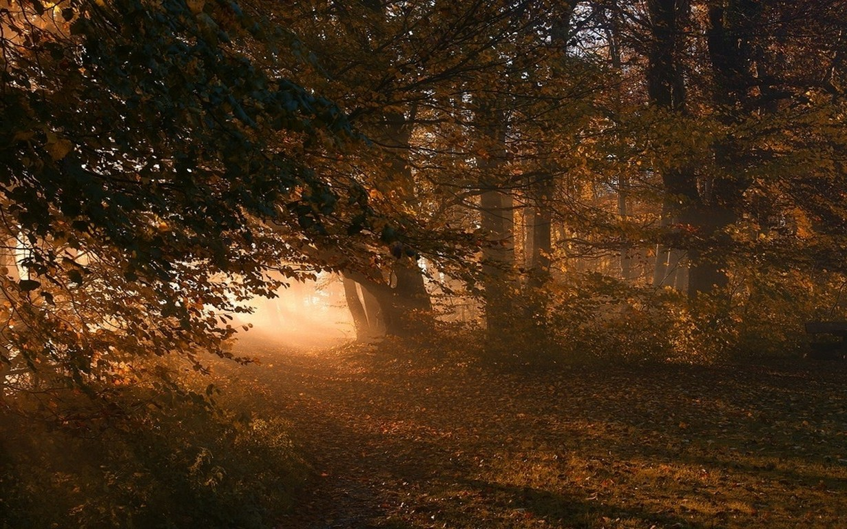 Fall Wallpaper Cars Nature Landscape Path Sunrise Leaves Forest Fall