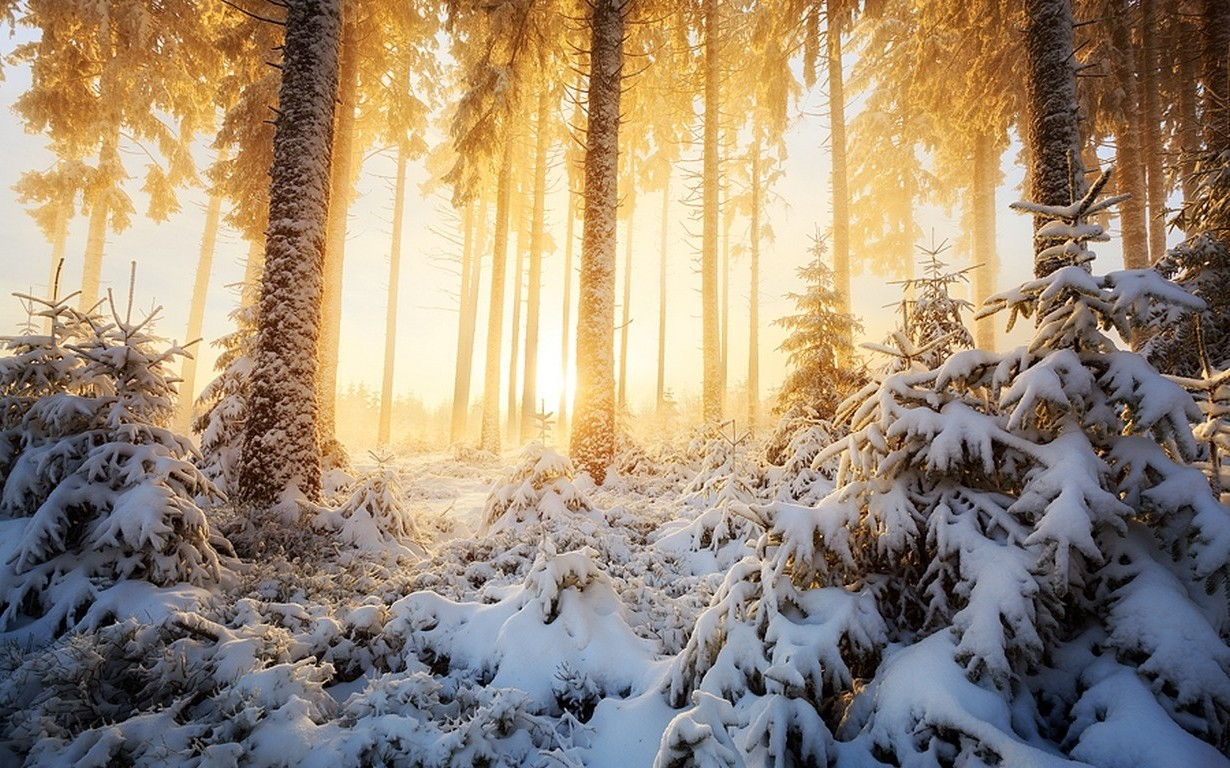 Full Hd 3d Wallpapers 1920x1080 Free Download For Mobile Nature Landscape Winter Sunrise Forest Mist Sunlight