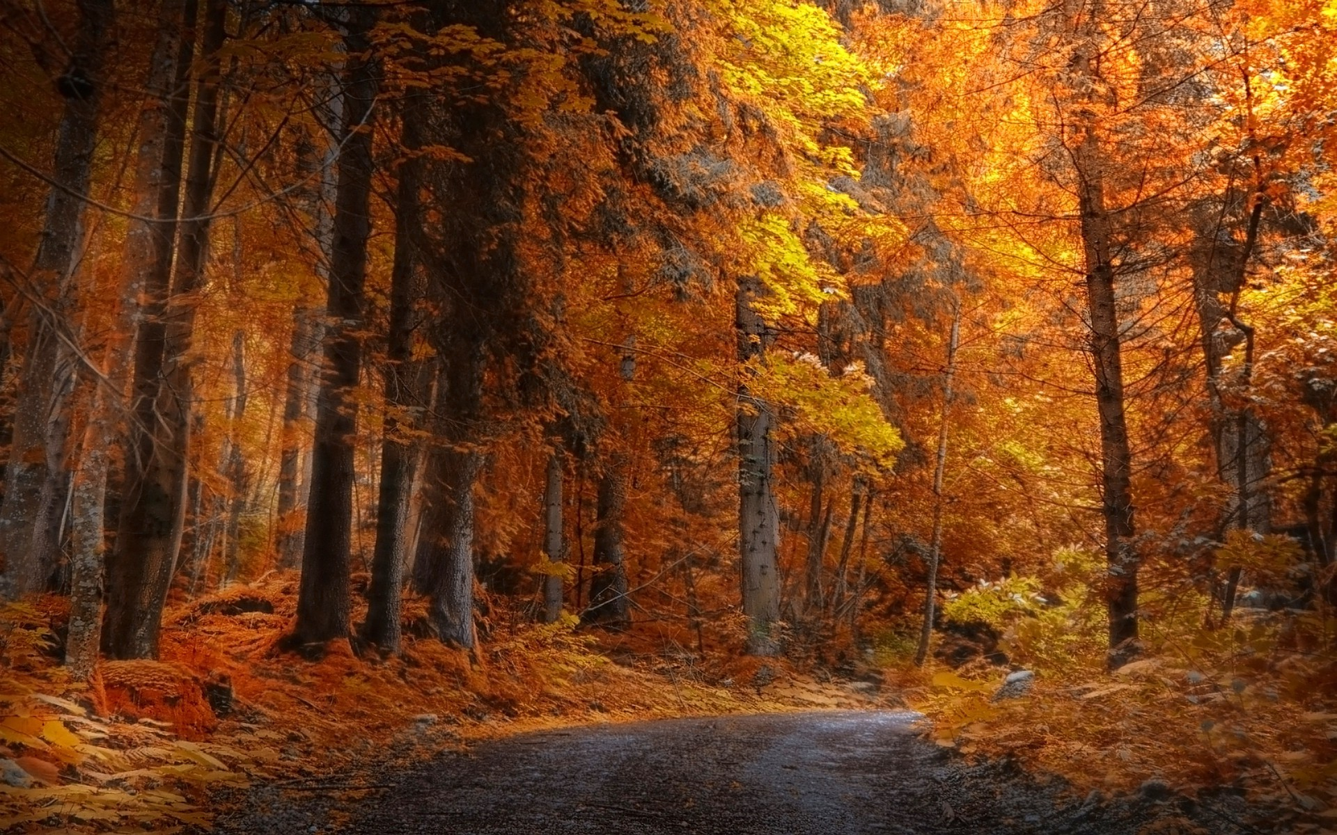 Free Wallpaper Fall 1600x900 Landscape Nature Fall Forest Road Yellow Trees