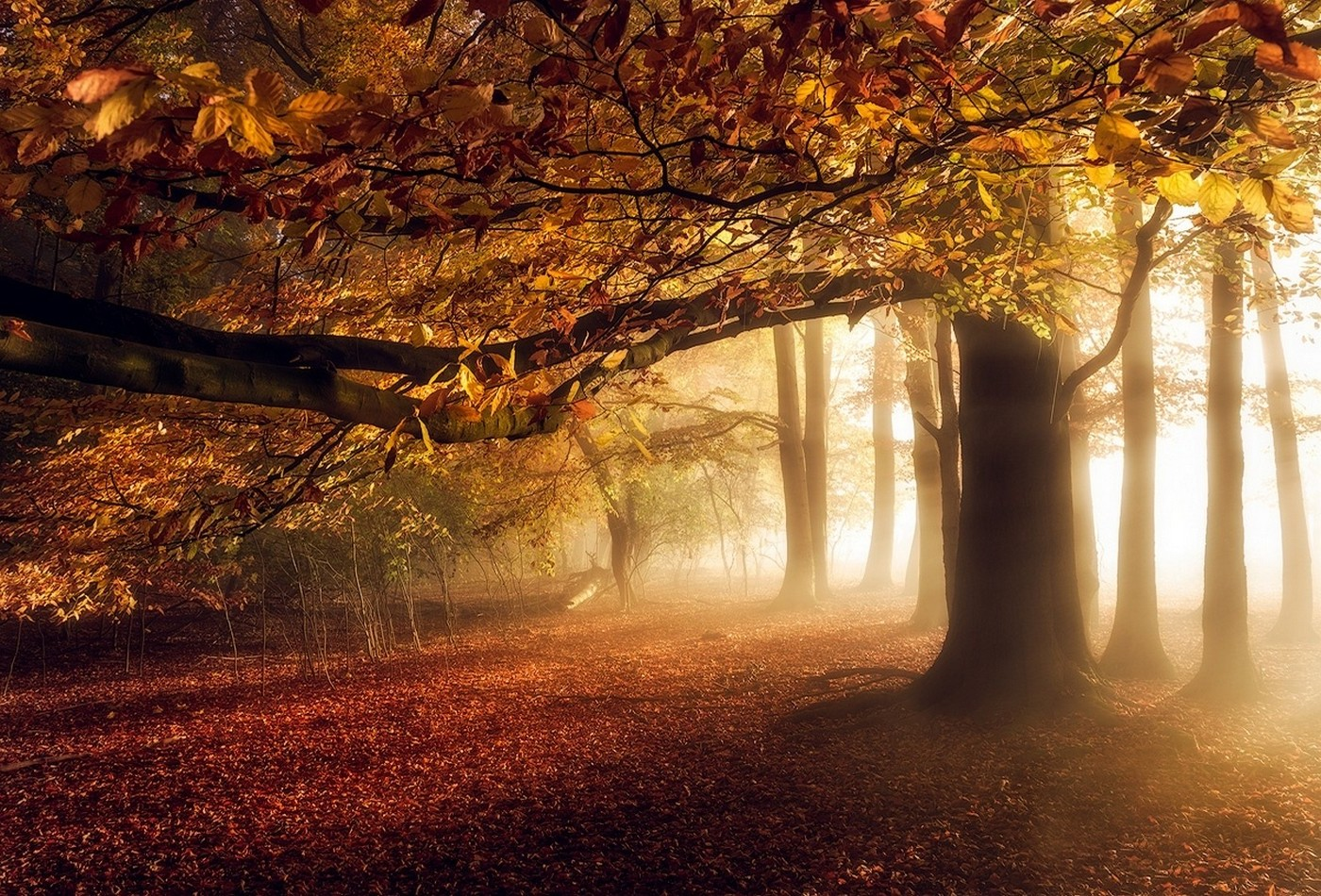 Vintage Fall Wallpaper Nature Landscape Fall Sunrise Mist Forest Leaves