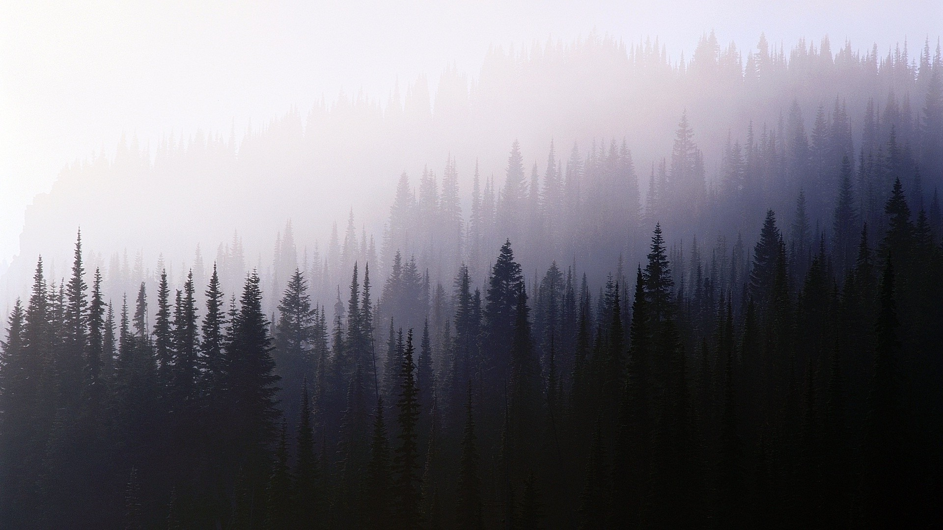 Iphone 5 Fall Wallpaper Forest Trees Nature Mist Wallpapers Hd Desktop And