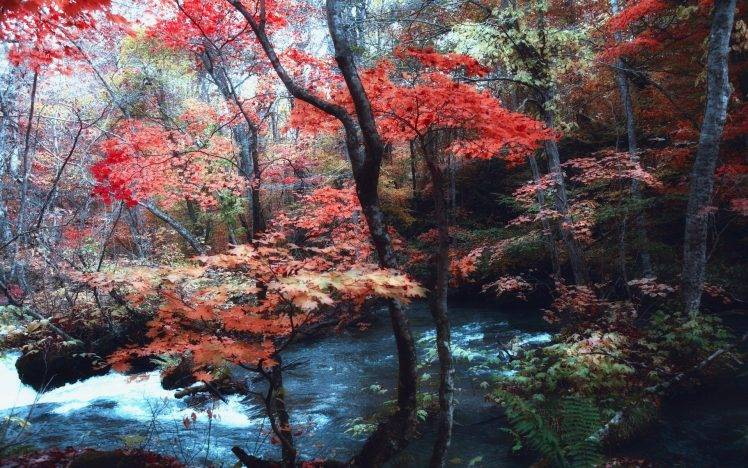 Fall Woodsy Pc Wallpaper Nature Landscape Maple Leaves Trees River Japan
