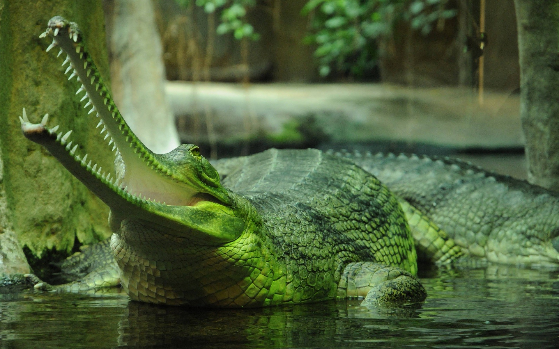 Hd Wallpapers Girls 1366x768 Animals Nature Gharial Crocodiles Wallpapers Hd