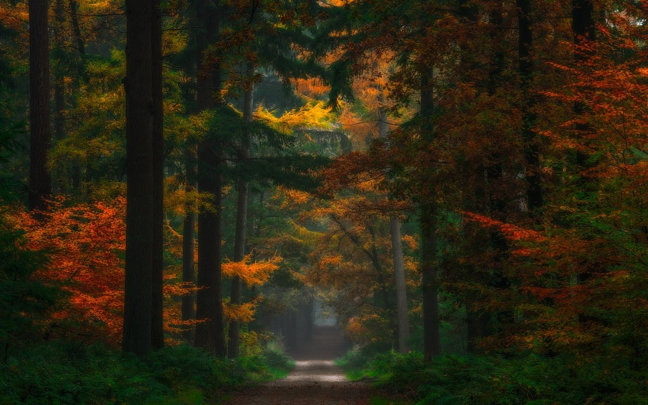 Netherlands Fall Wallpaper Nature Landscape Forest Fairy Tale Fall Path Trees