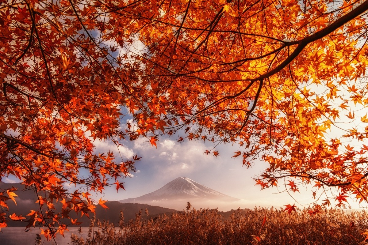 Desktop Wallpaper Fall Leaves Fall Volcano Mount Fuji Japan Orange Leaves Mountain
