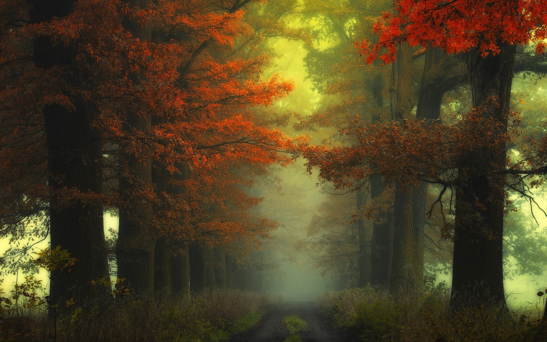 Free Wallpaper Fall 1600x900 Nature Landscape Mist Forest Path Sunrise Shrubs