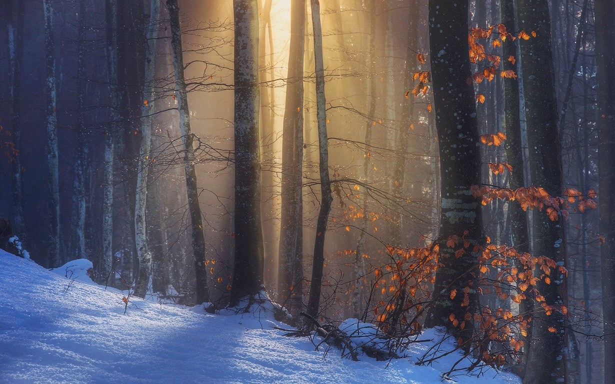 Fall Leaves Hd Desktop Wallpaper Nature Landscape Sun Rays Sunlight Forest Fall Snow