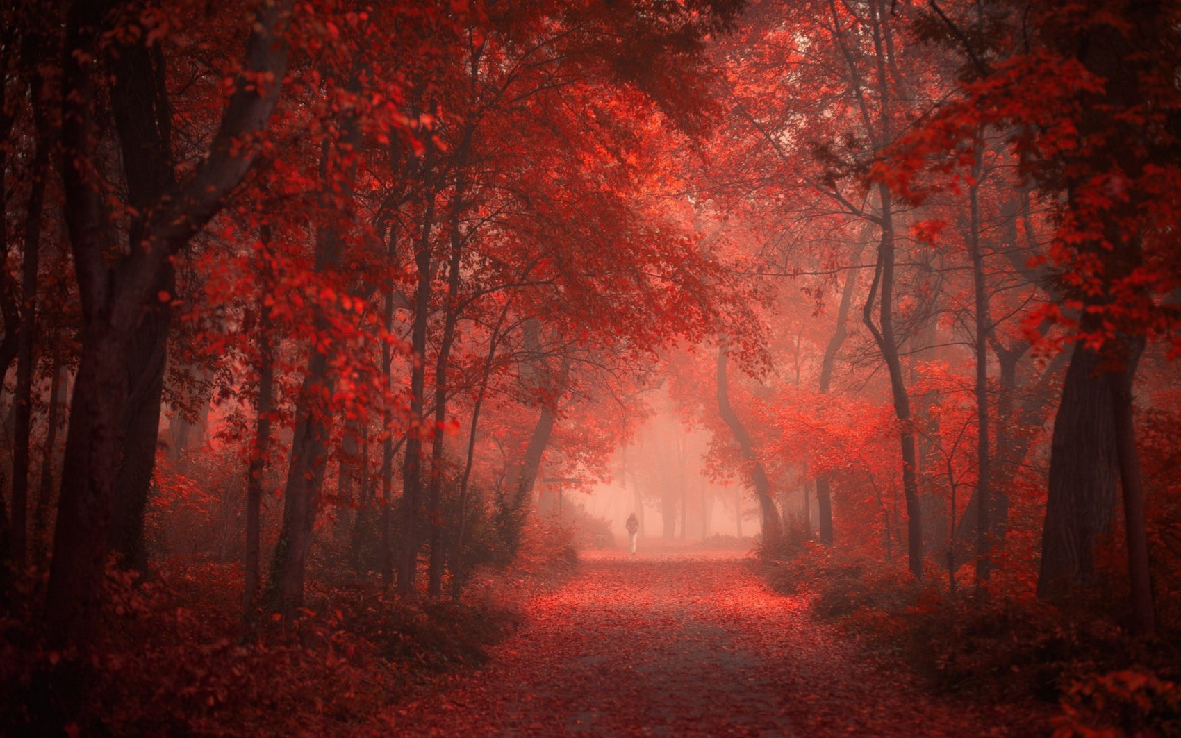 Pretty Wallpapers For Fall Nature Landscape Park Road Fall Red Leaves Mist