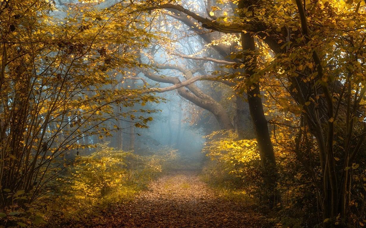 1280x1024 Fall Wallpaper Nature Landscape Fall Forest Sunlight Mist Shrubs