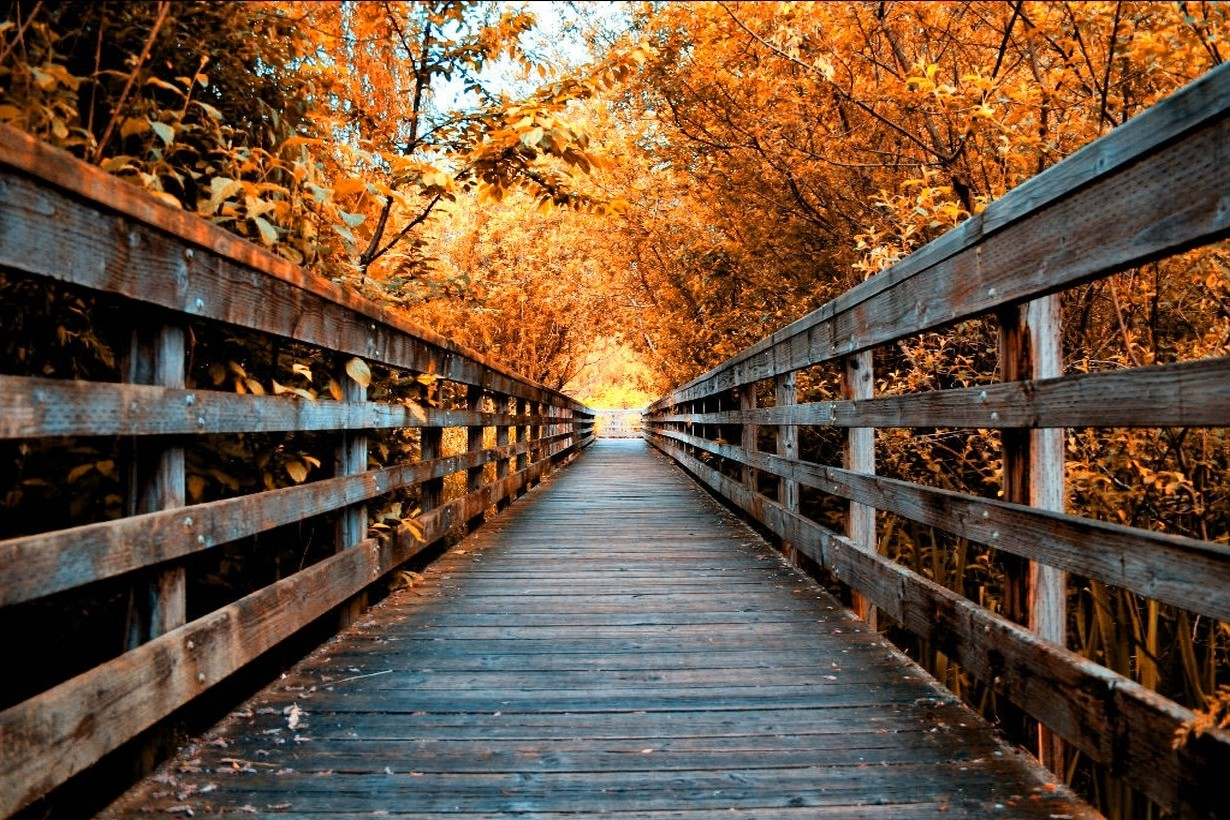 Vintage Fall Wallpaper Nature Landscape Fall Road Trees Walkway Wooden
