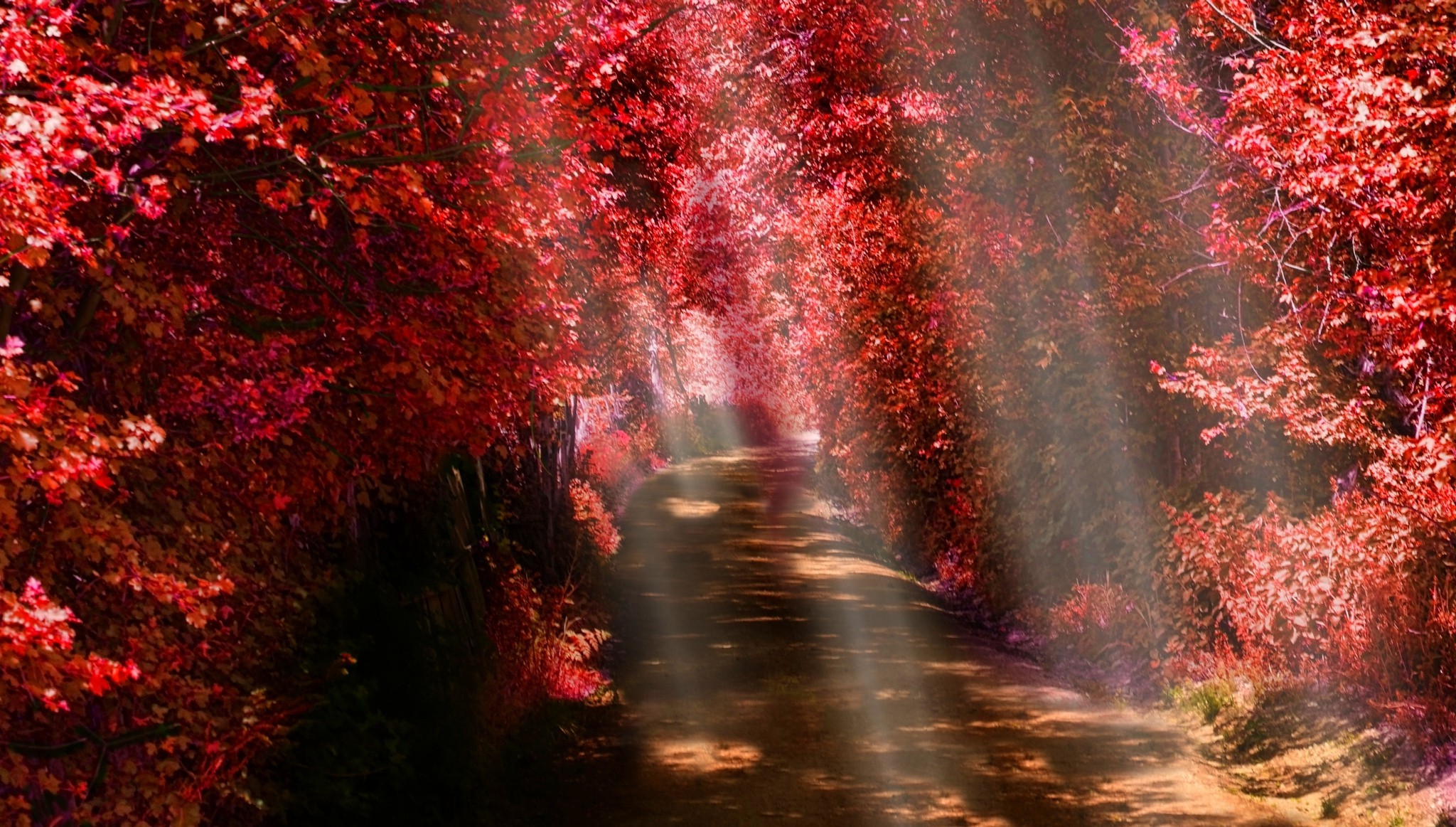 Autumn Fall Wallpaper 1600x900 Landscape Nature Sun Rays Path Fall Red Leaves
