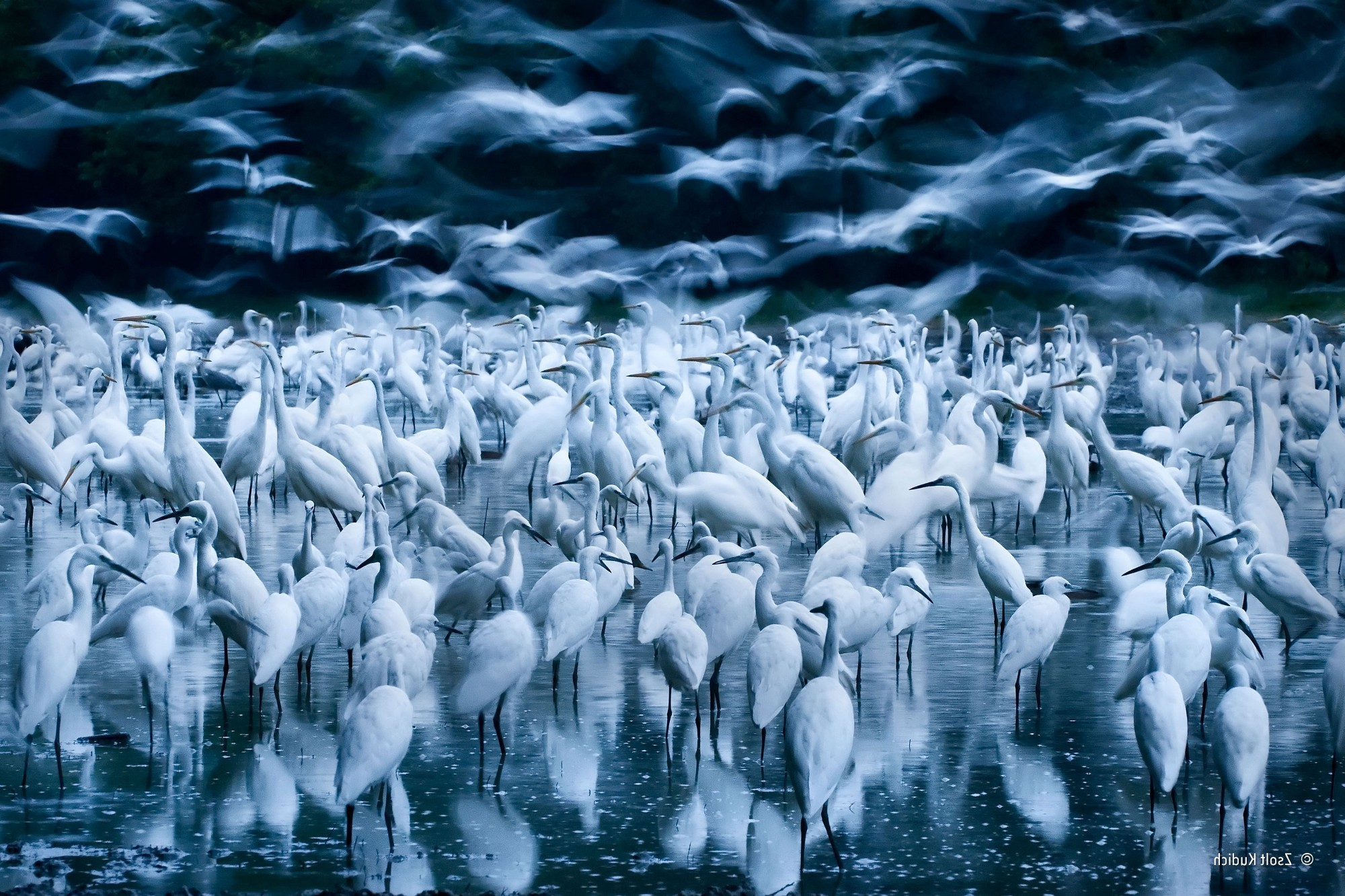4k Wallpaper 3d National Geographic Nature Animals Birds Water Flying Winner Photography