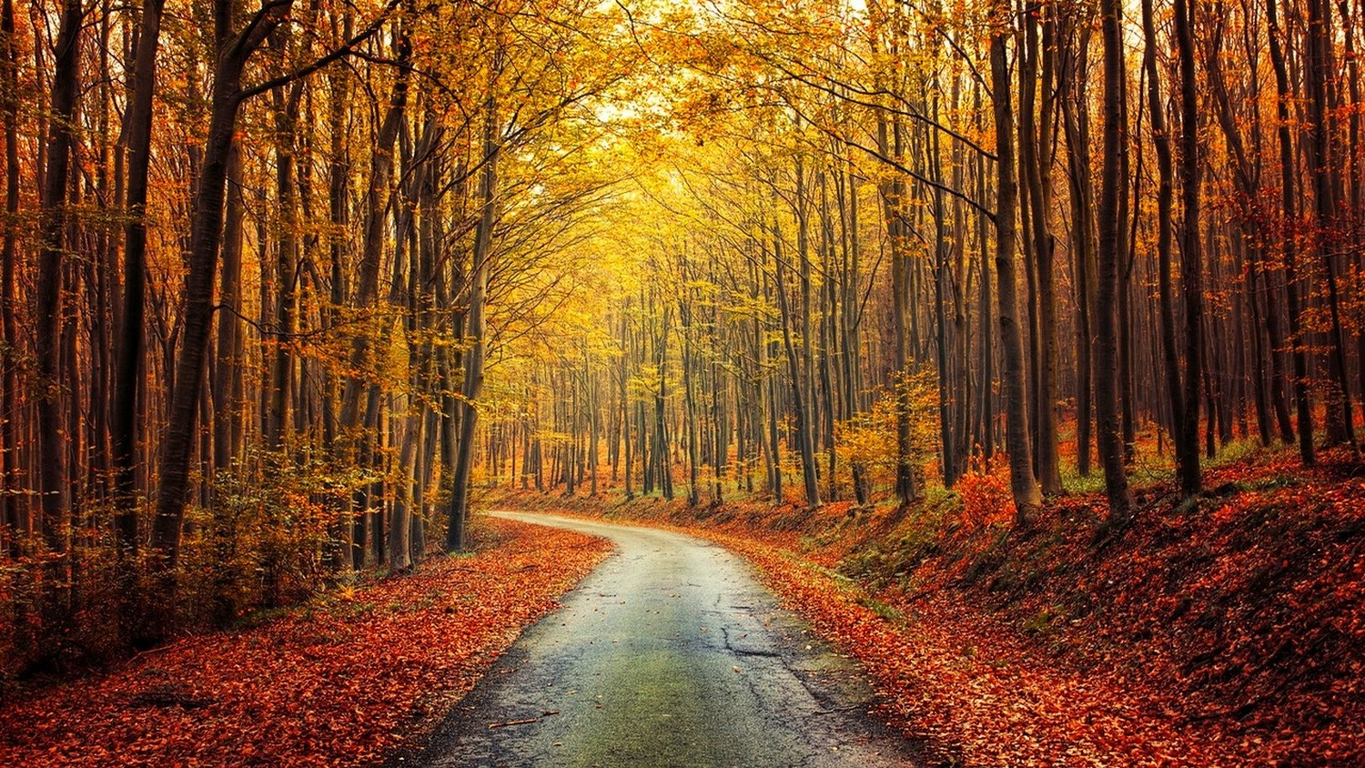 Free Fall Images Desktop Wallpaper Nature Landscape Fall Forest Road Red Yellow Leaves