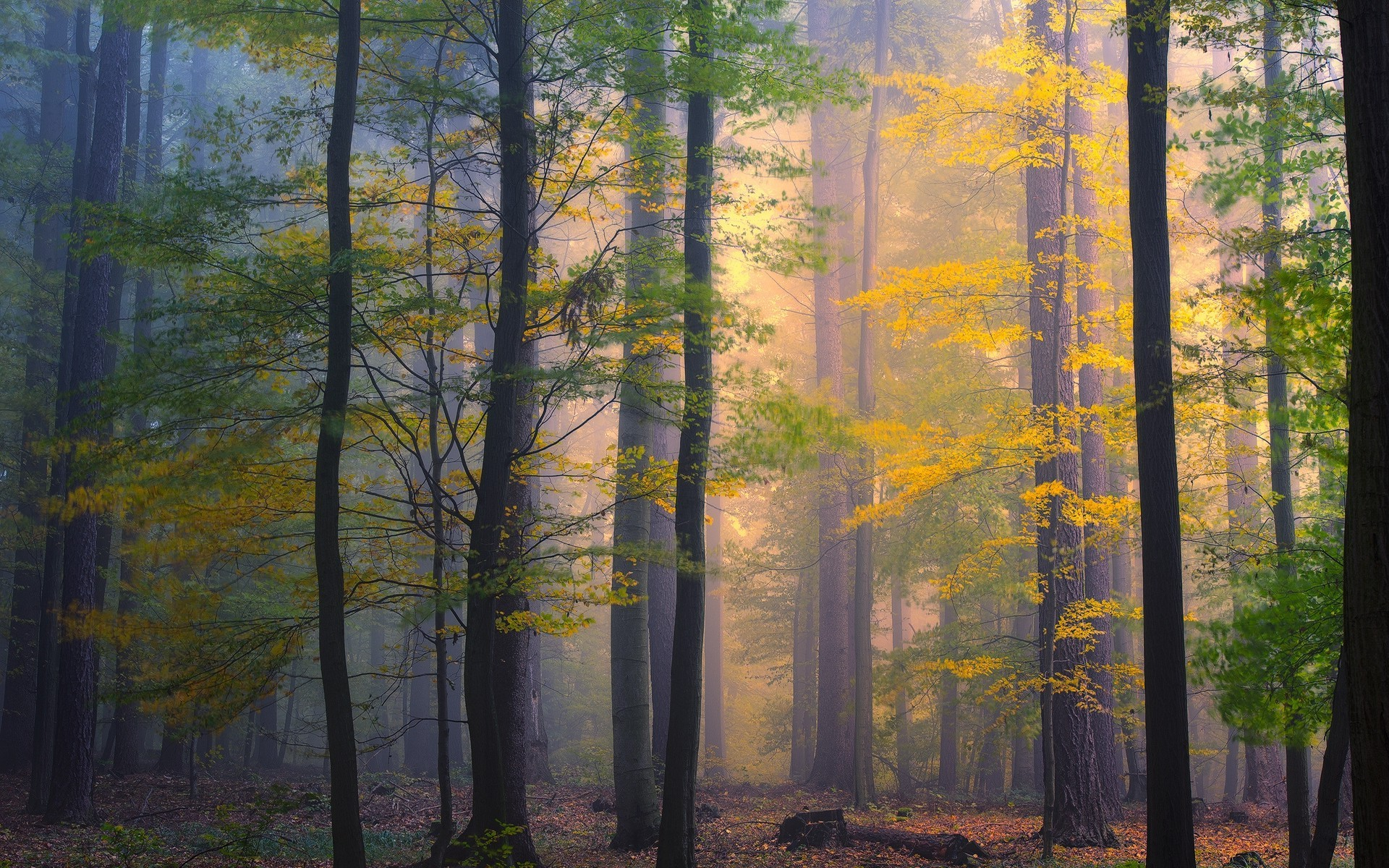 Full Screen Desktop Fall Leaves Wallpaper Nature Landscape Forest Morning Mist Fall Leaves