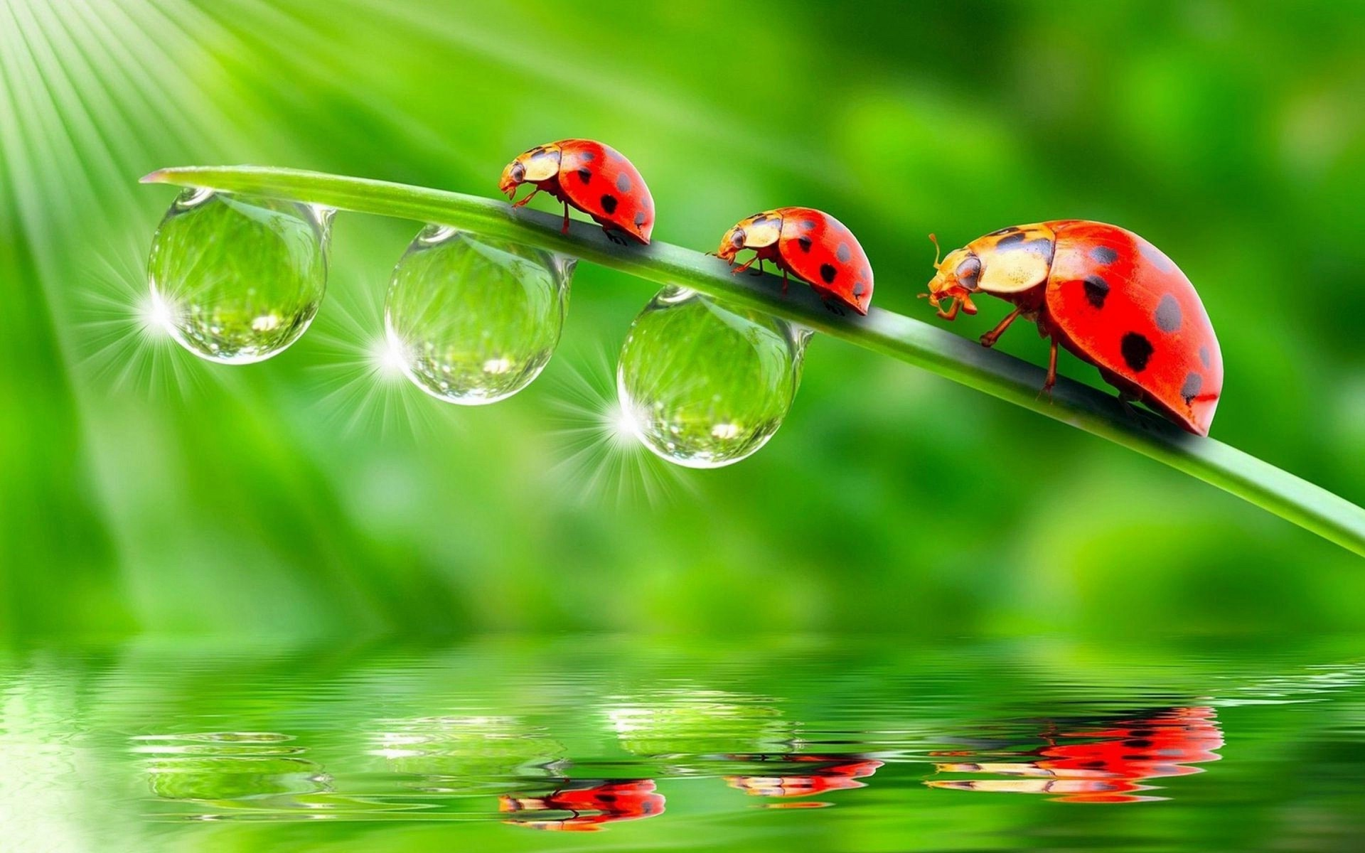 Raindrops 3d Live Wallpaper Ladybugs Animals Insect Water Drops Reflection