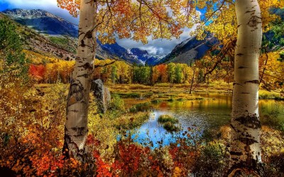 nature, Fall Wallpapers HD / Desktop and Mobile Backgrounds