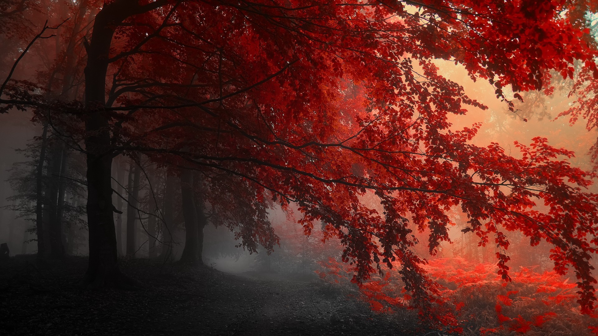 1280x800 Fall Wallpaper Fall Mist Red Nature Wallpapers Hd Desktop And Mobile