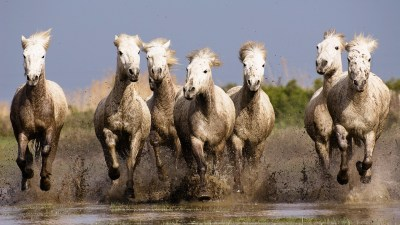 nature, Horse, Animals, Running Wallpapers HD / Desktop and Mobile Backgrounds