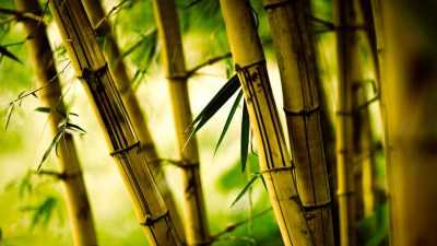 nature, Bamboo Wallpapers HD / Desktop and Mobile Backgrounds