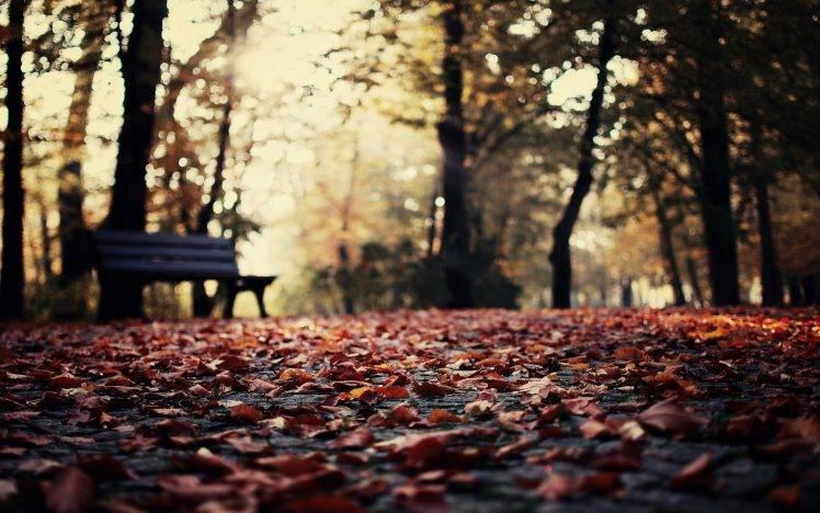 Full Screen Desktop Fall Leaves Wallpaper Nature Depth Of Field Leaves Fall Bench Bokeh