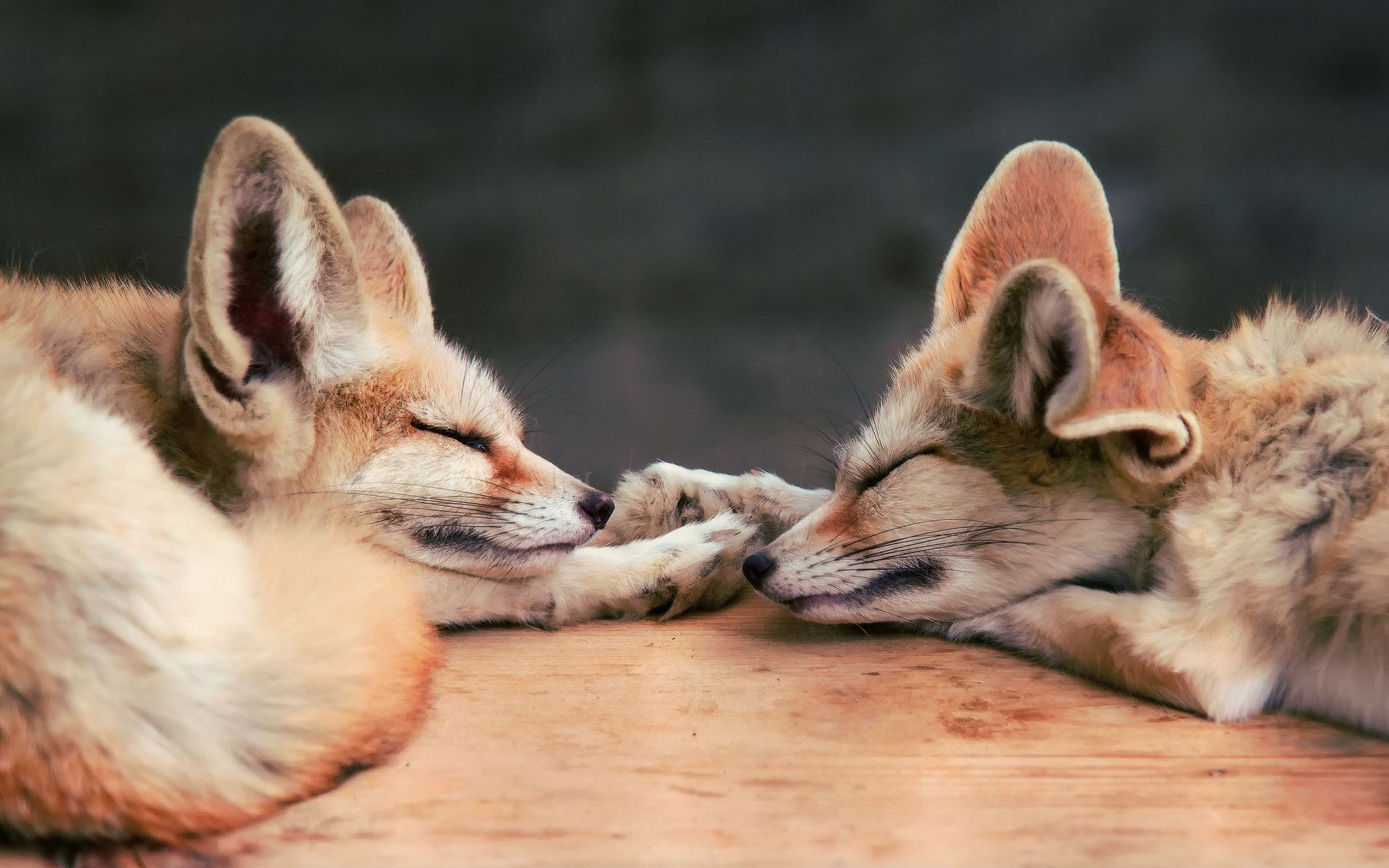 Cute Sleeping Baby Wallpapers Fox Baby Animals Animals Sleeping Wallpapers Hd
