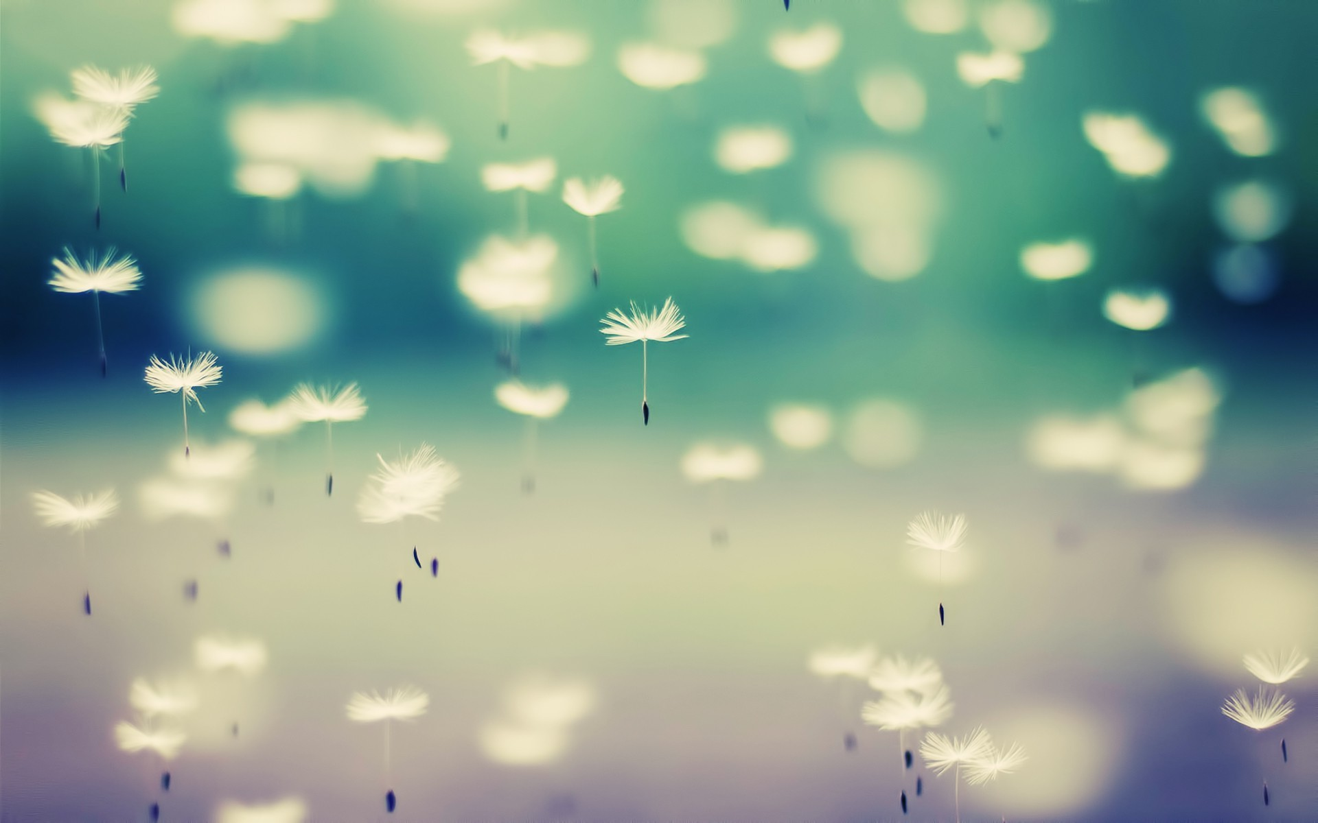Love One Side Quotes Wallpaper Dandelion Flowers Floating Wallpapers Hd Desktop And