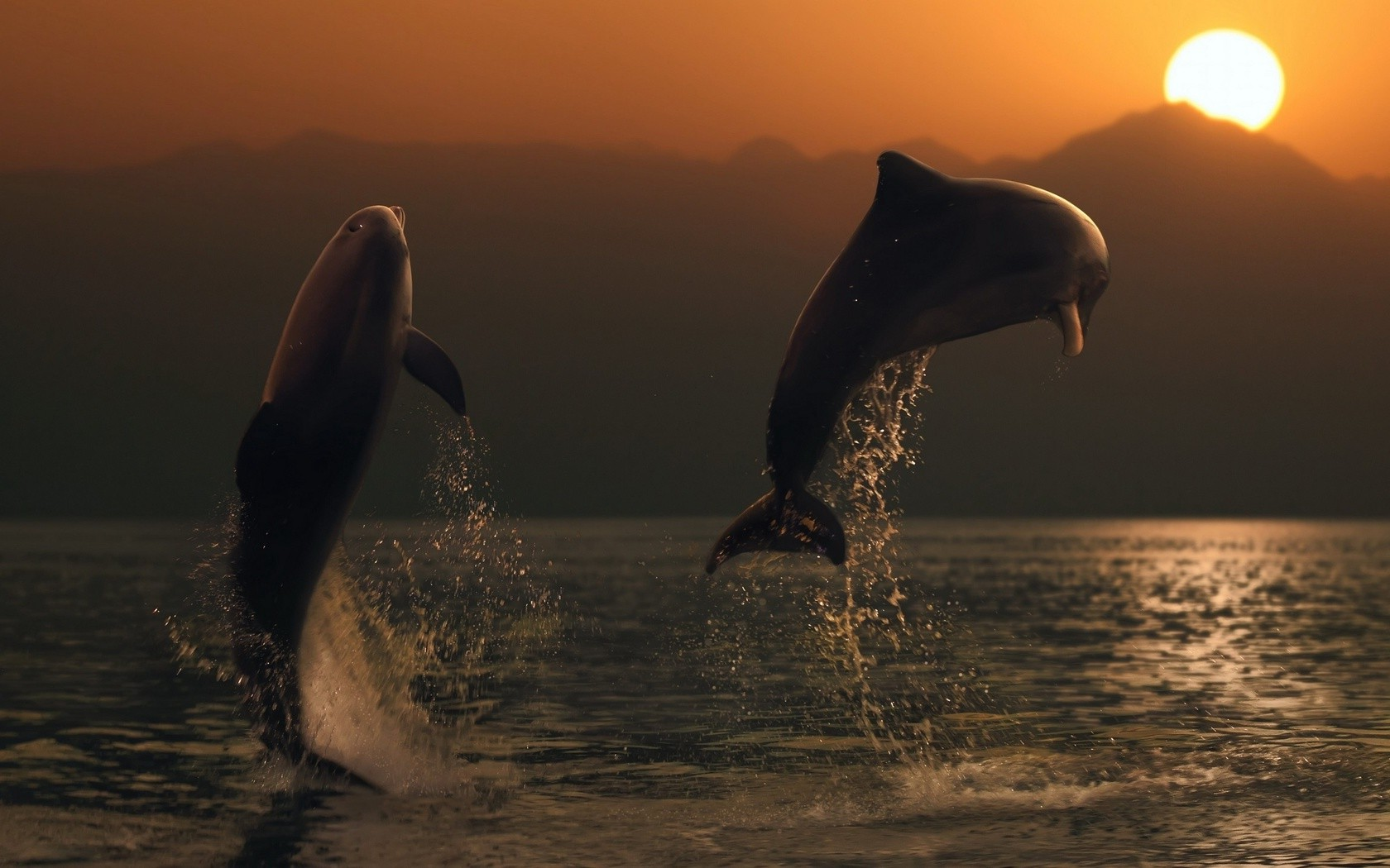 3d Dolphin Wallpaper Download Animals Dolphin Sea Sunset Wallpapers Hd Desktop And