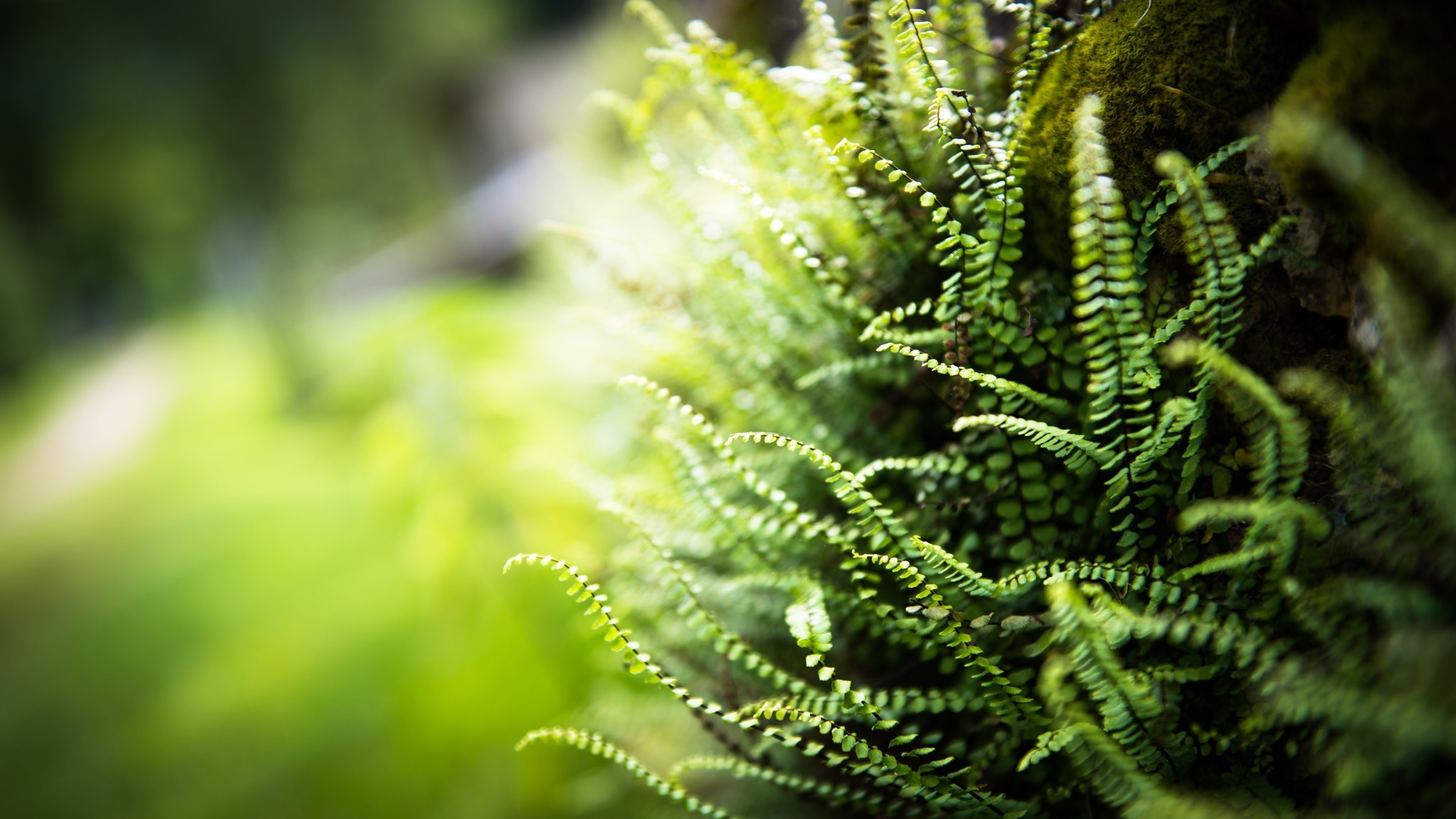 Jungle Animal Wallpaper Nature Ferns Blurred Depth Of Field Plants Wallpapers