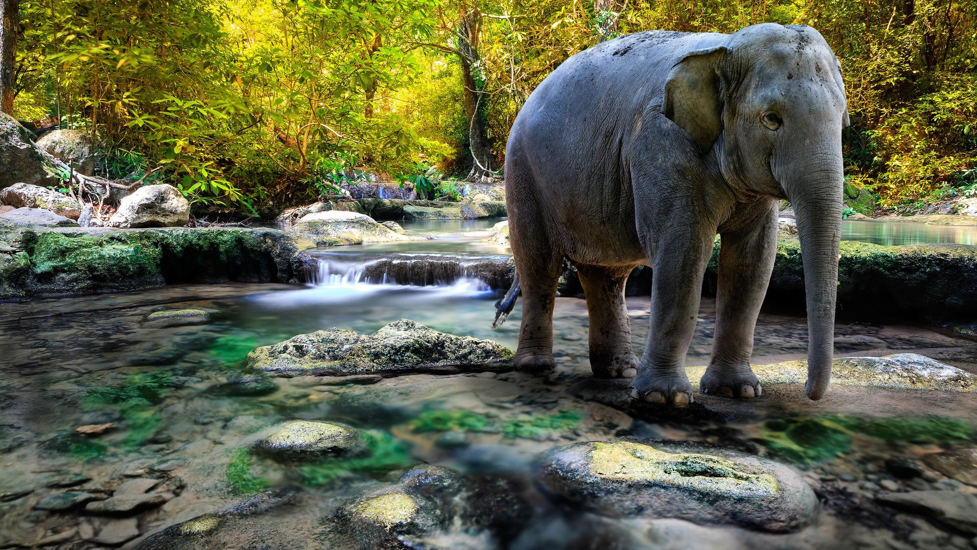 3d Wallpapers For Home Screen Elephants River Nature Animals Wallpapers Hd Desktop