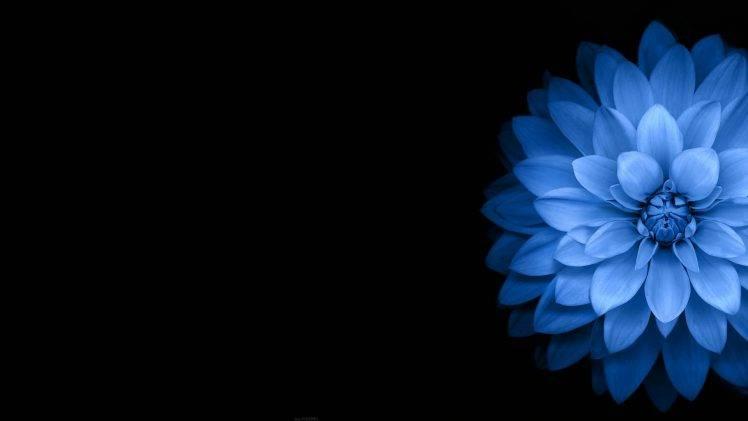 flowers, Blue, Black, Dark Wallpapers HD / Desktop and Mobile