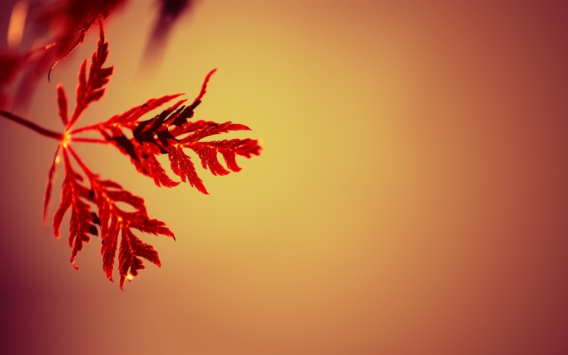 Fall Leaves Computer Wallpaper Nature Simple Simple Background Leaves Gradient Depth