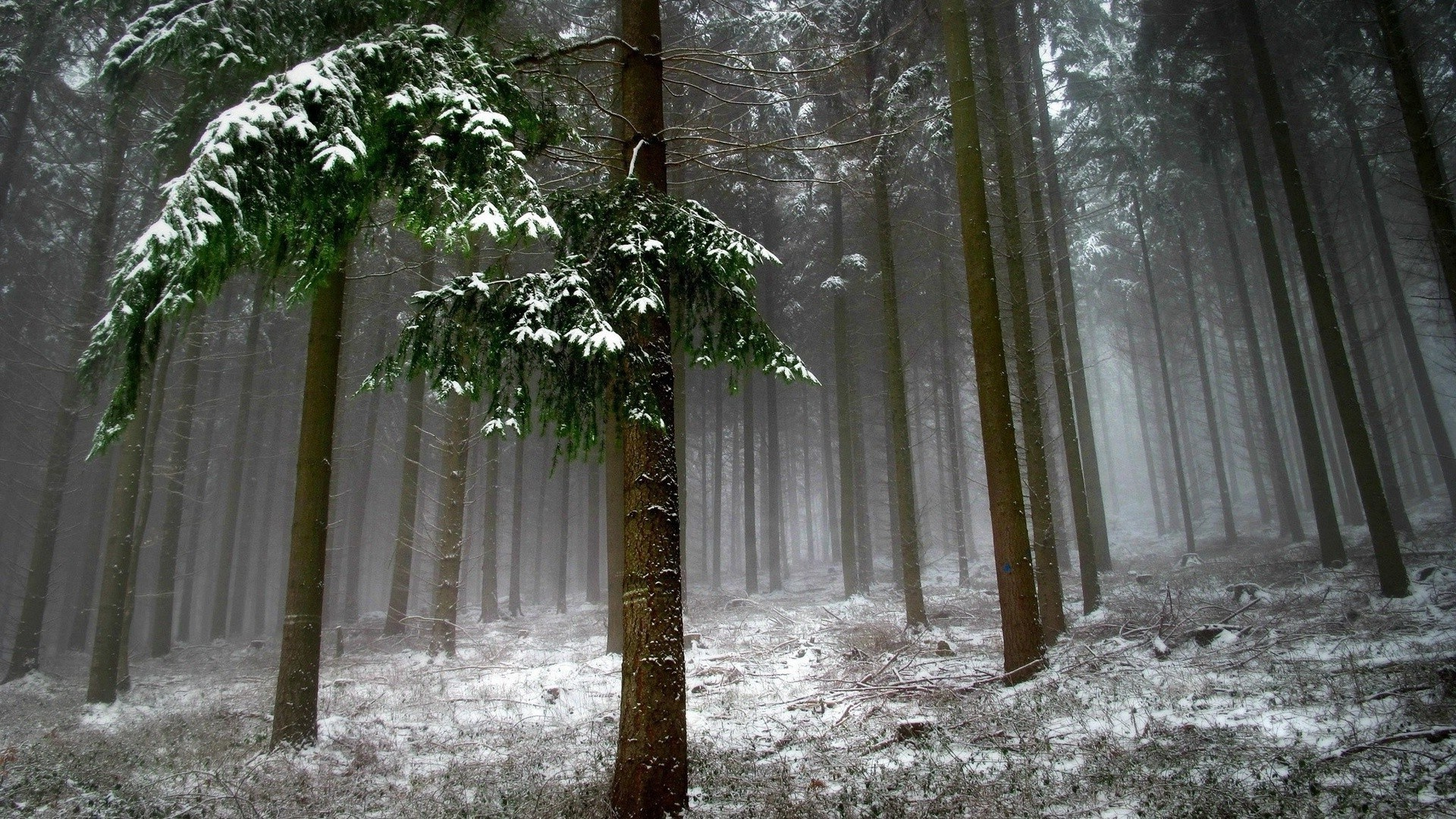 3d Animal Wallpapers Desktop Free Download Nature Trees Leaves Branch Forest Mist Winter Snow