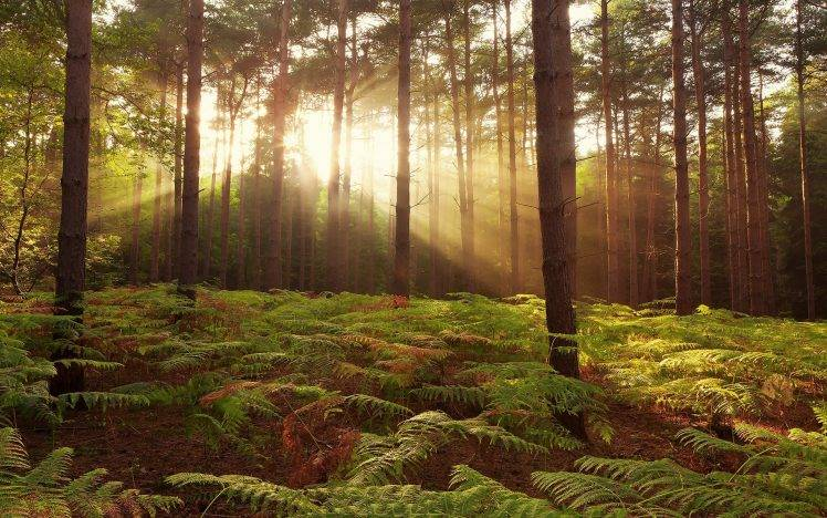 Full Hd Wallpaper For 5 Inch Screen Nature Trees Forest Sun Rays Leaves Branch Plants