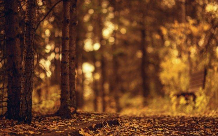 Fall Leaves Wallpaper Windows 7 Brown Bench Blurred Nature Wallpapers Hd Desktop And