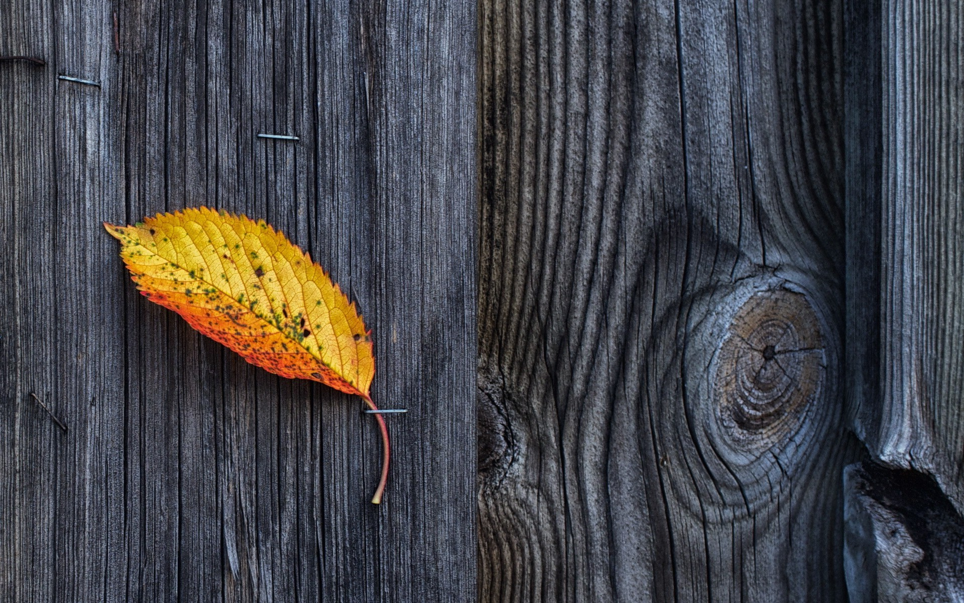 High Resolution Wallpaper Fall Leaves Nature Wooden Surface Wood Texture Pattern Fall