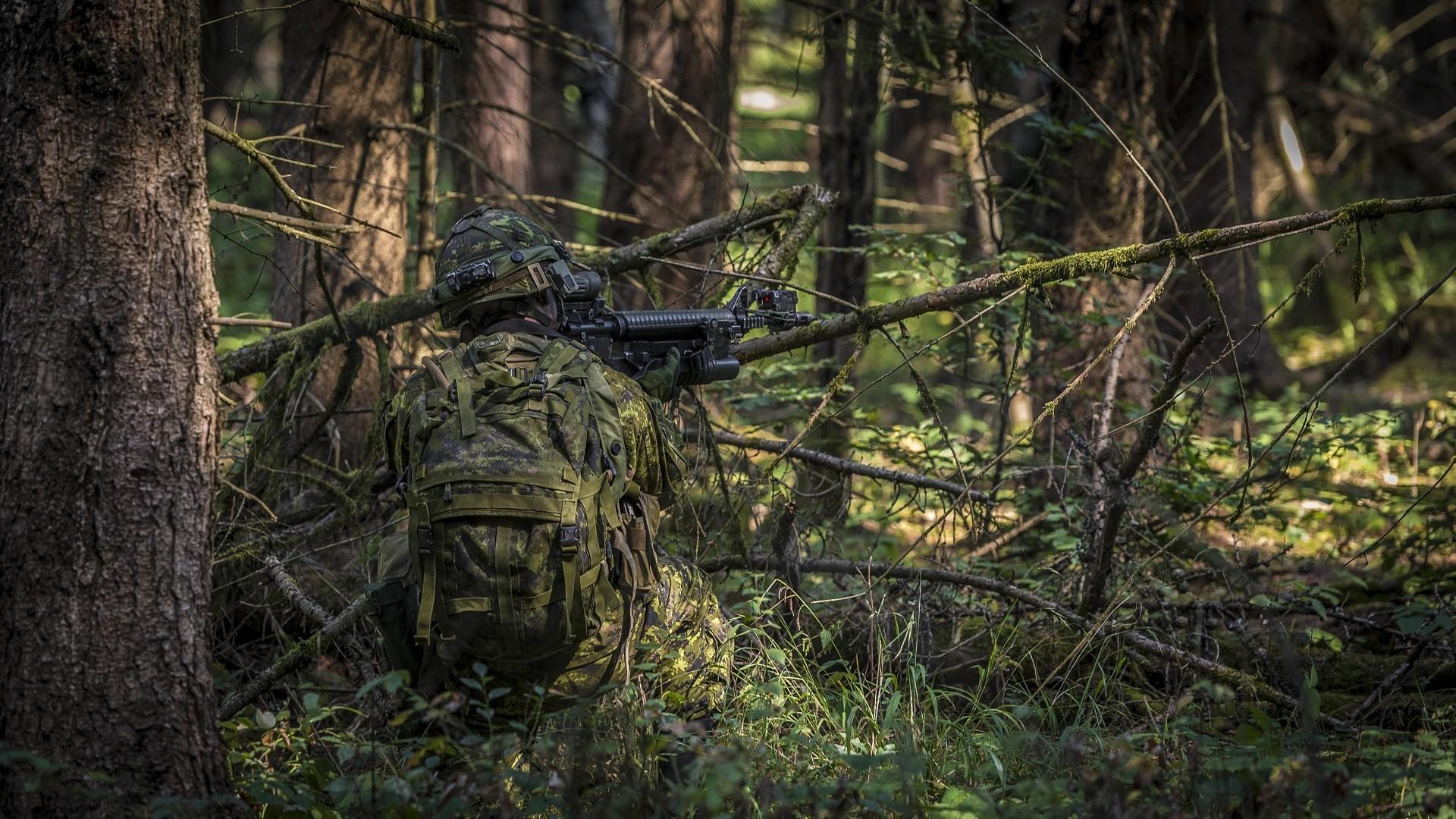 Fall Owl Wallpapers Men Soldier Rifles Assault Rifle Forest Military