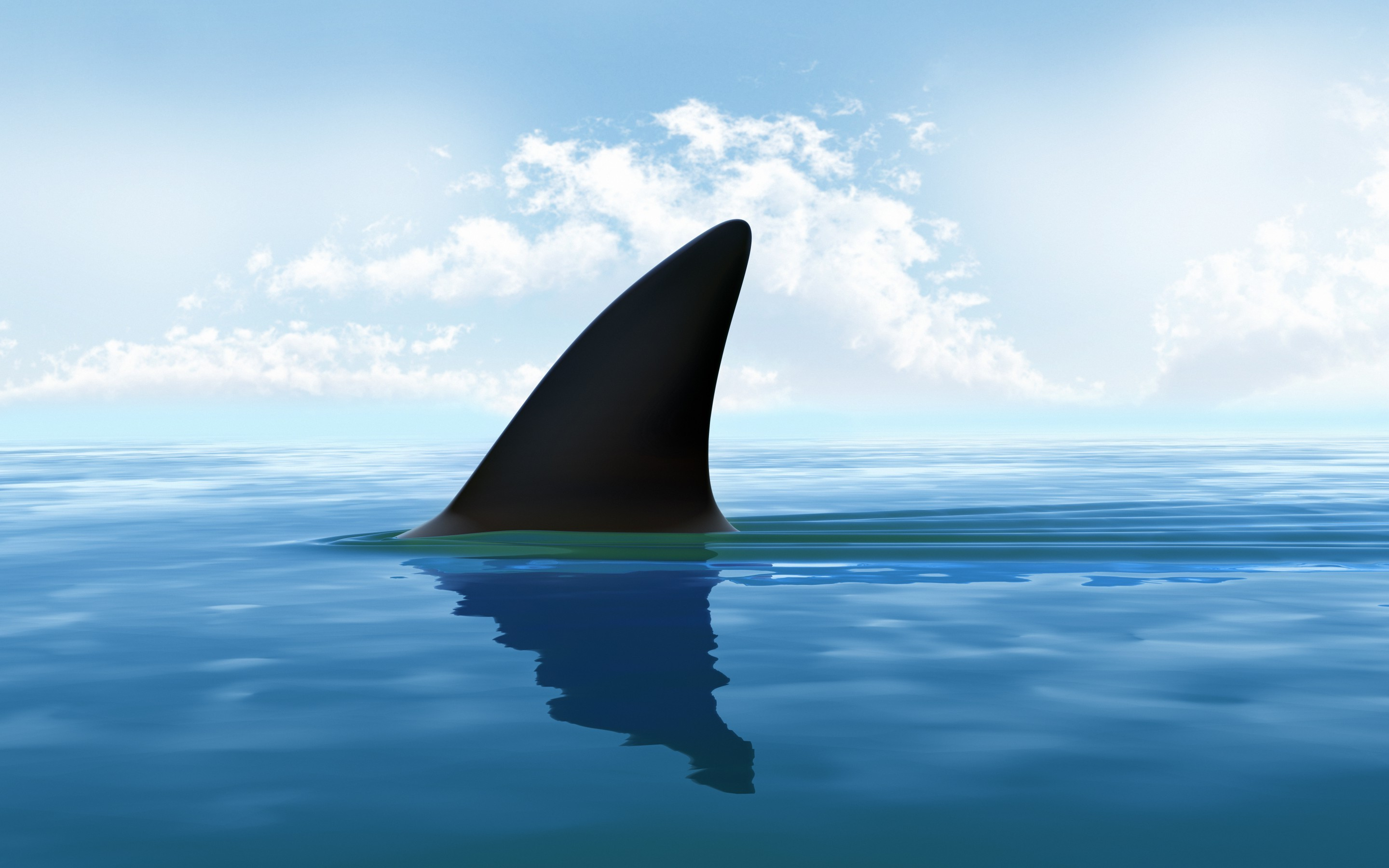 Cute Wallpapers Gold White Shark Fin In Water